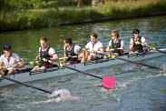M2 rowing up, May Bumps 2014